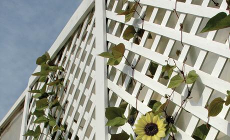 nos conseils sur vos panneaux treillis en bois exotique. Black Bedroom Furniture Sets. Home Design Ideas