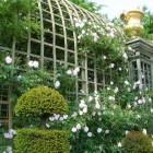 Treillage à Versailles